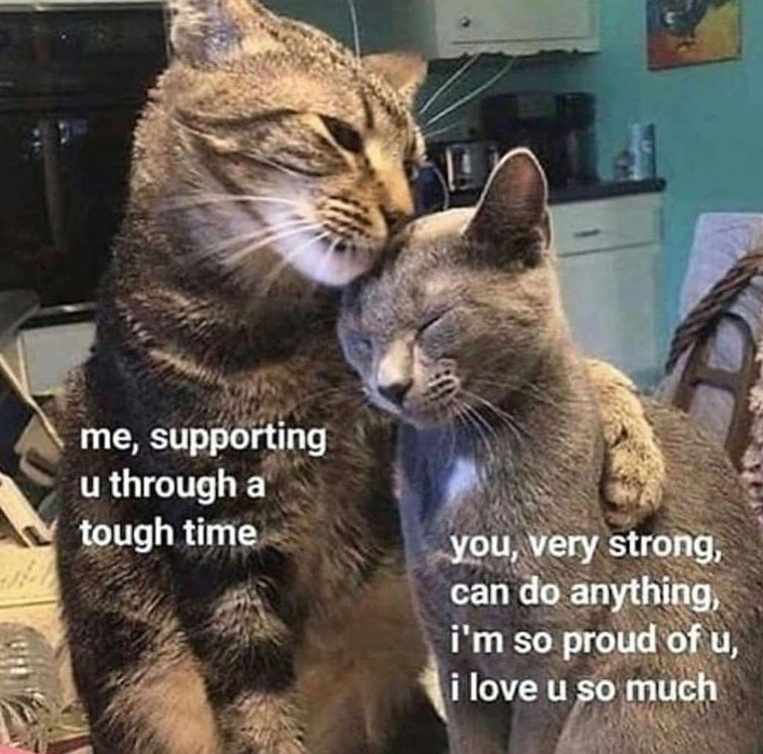 two cats snuggling, labeled:  me, supporting u through a tough time  you, very strong, can do anything, I'm so proud of u, I love u so much