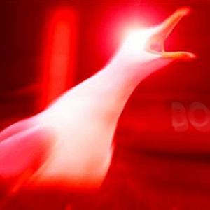 :seagull: