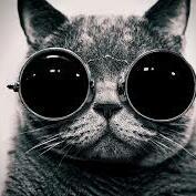 catgoggles@liberdon.com
