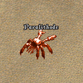 Paralithode