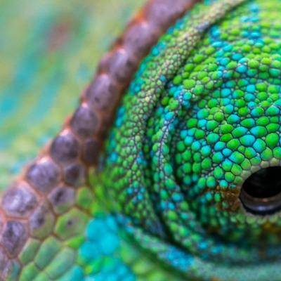 Chameleon Scales