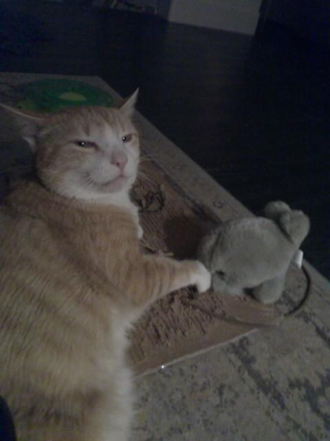 Orange shorthair Pixel J. Cat, Esq., with Mr. Walrus