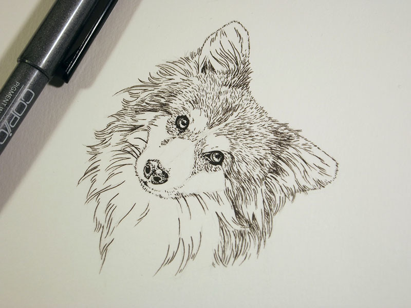 pen drawing of a cute fluffy dog