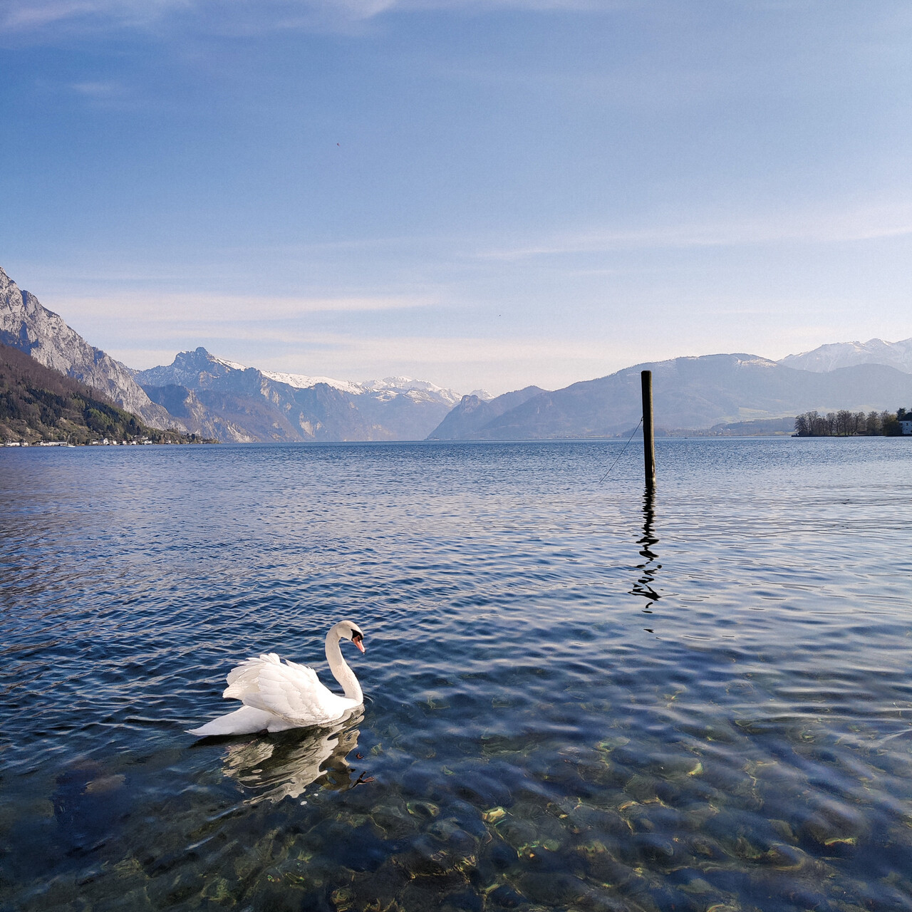 photo of a white swan swimming in a lake, with mountains in the background.