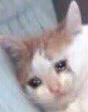 :sad_cat: