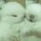 :rabbit_white: