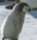 :polarpenbaby: