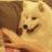 :dog_01: