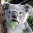 :surprised_koala: