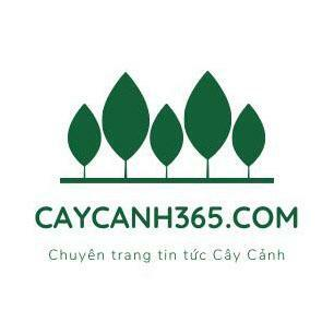caycanh365@toot.wales